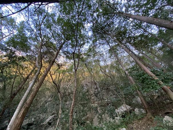 龍河洞自然植物園マイナスイオン