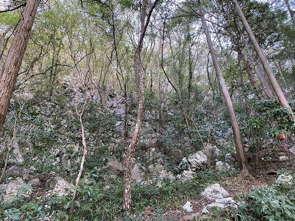 龍河洞自然植物園