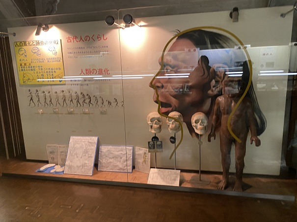 龍河洞博物館弥生人