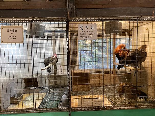 珍鳥センター展示