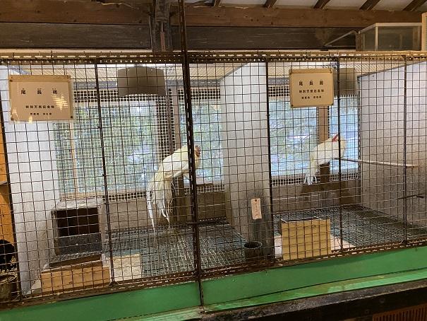珍鳥センター鳥鶏