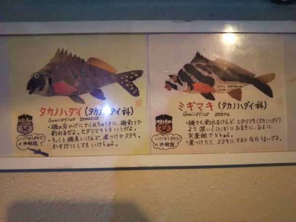 魚解説プレート