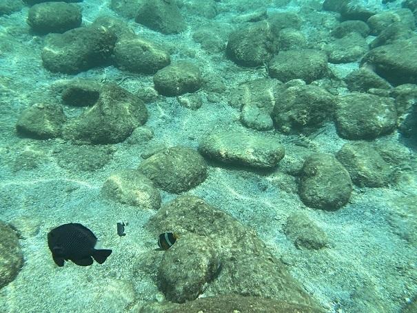 太平洋側は銛で熱帯魚が突ける