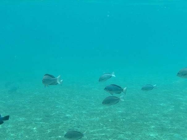 銛で突ける魚