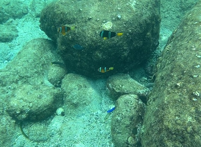 海の安全を守るOmer オマー フロートブイ