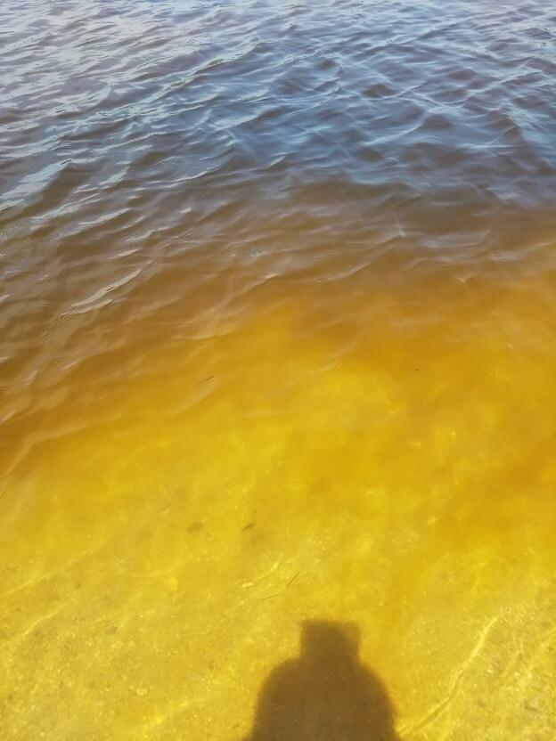 香川県三豊市仁尾町の蔦島の海の赤潮
