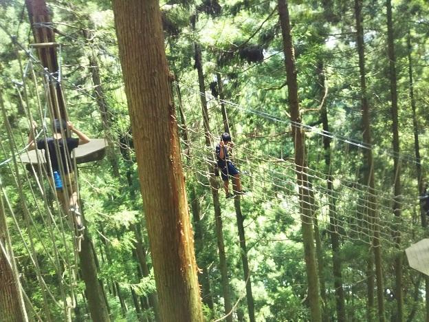 木の上のアスレチック