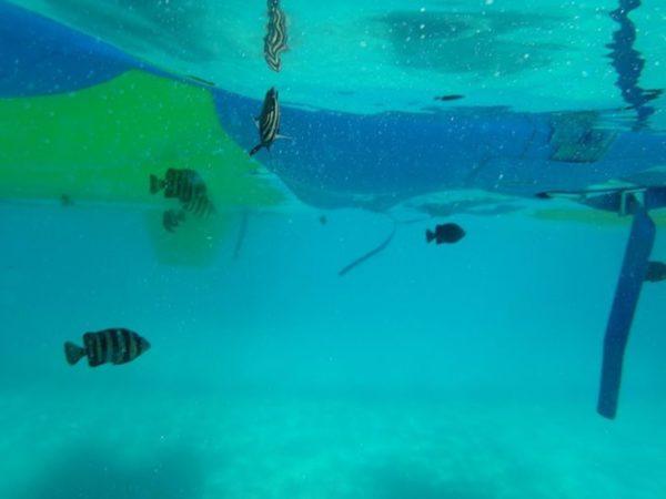 浦富海岸で泳ぐ魚
