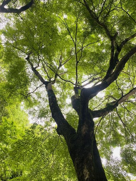 馬立川の木