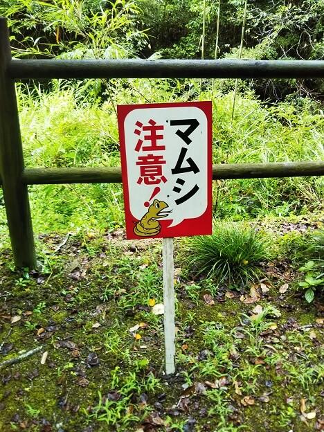 塩江不動の滝 マムシ注意