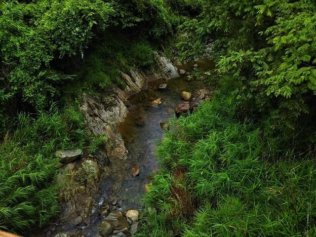 tatutaの森 橋からの川