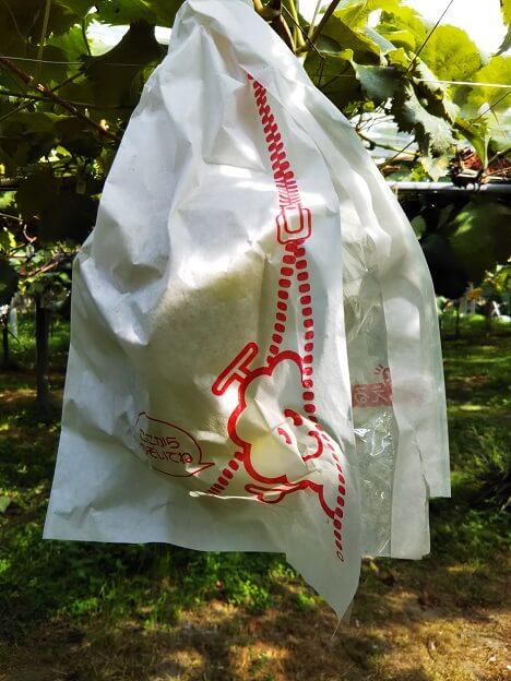 三木ぶどう園シャインマスカット