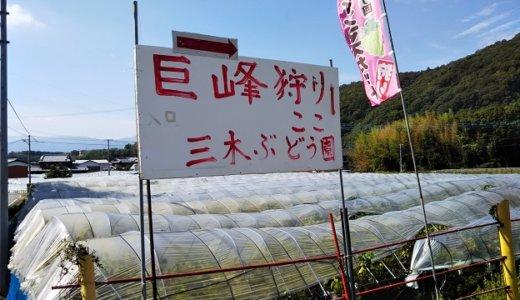 三木ぶどう園でピオーネやシャインマスカットのぶどう狩り 徳島県阿波市