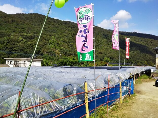 徳島県阿波市三木ぶどう園