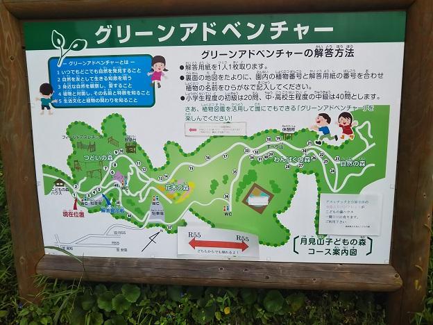 高知県立月見山こどもの森 グリーンアドベンチャー