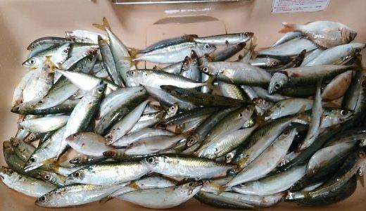 香川県 子供とアジ サバ イワシのサビキ釣り場おすすめ6選
