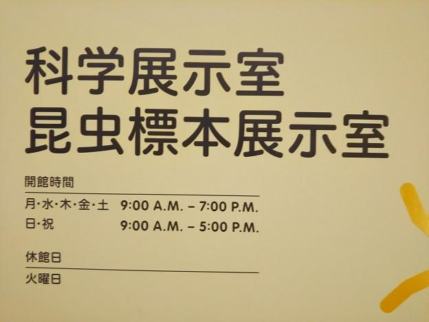 ミライエ 科学展示室 昆虫標本