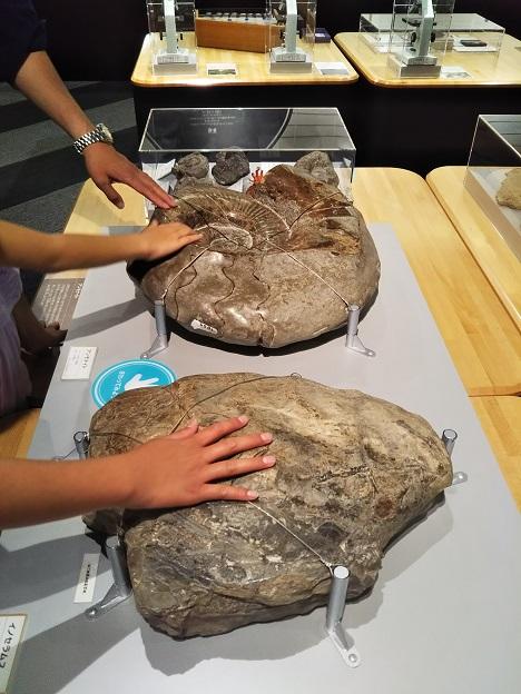 ミライエ さわれる化石