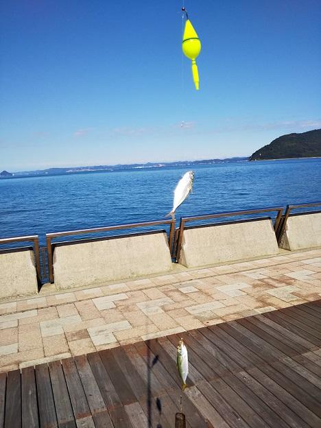 サンポート高松赤アジが2匹釣れる