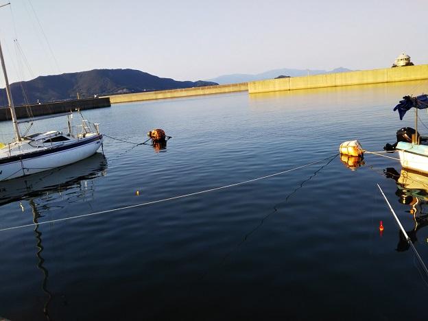 鶴羽漁港でサビキ釣り