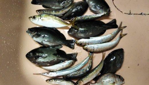 さぬき市津田町 鶴羽漁港のサビキ釣りでイワシやアジを