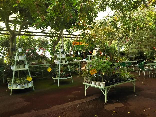西島園芸団地 植物1