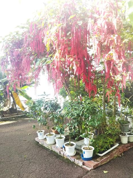 西島園芸団地 植物2