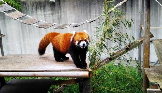 徳島県のとくしま動物園 北島建設の森 リスザルが可愛い