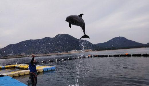 日本ドルフィンセンター さぬき市のイルカと触れ合える クラフト体験も
