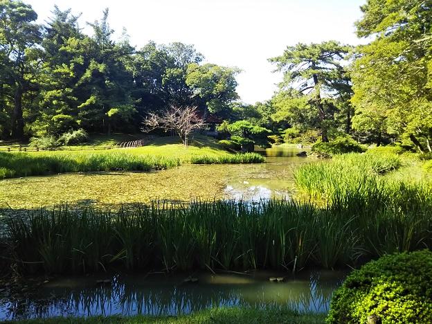栗林公園 花菖蒲園