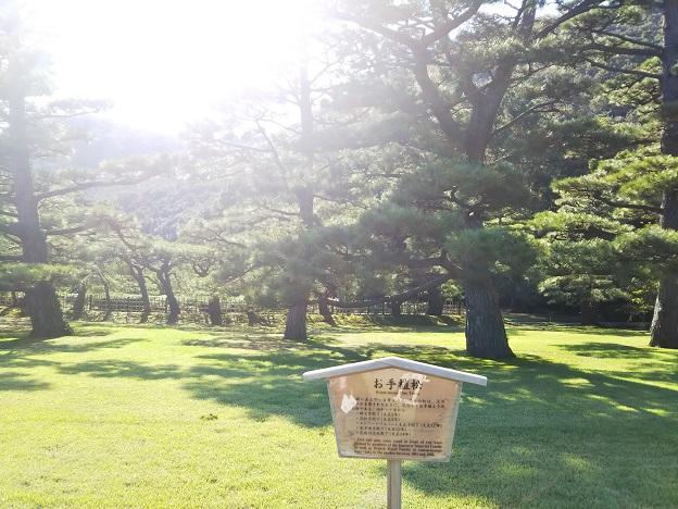 栗林公園 お手植松