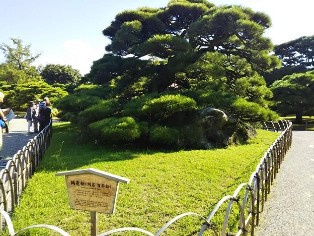 栗林公園 鶴亀松