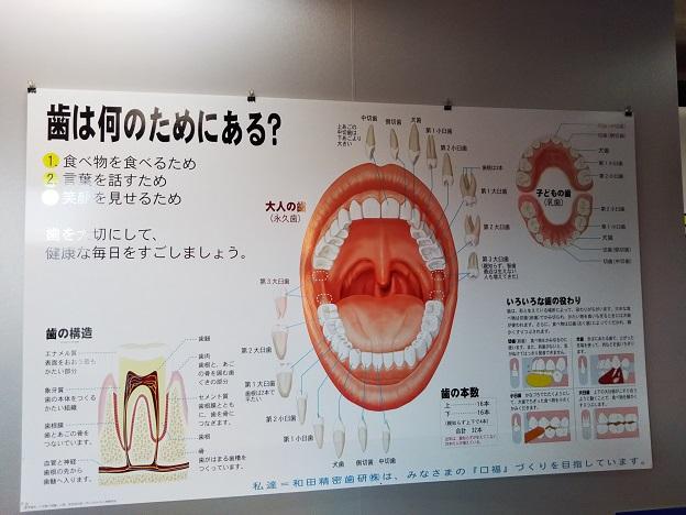 歯ART美術館 2階3