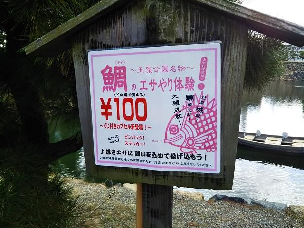 玉藻公園鯛のエサやり体験 案内