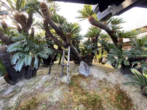 飛雲閣玉藻公園そてつの間