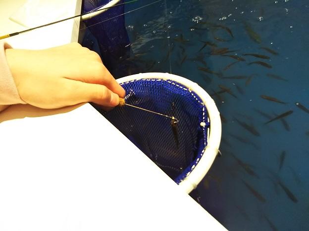 つりぼりcafeピラルク 魚をとる