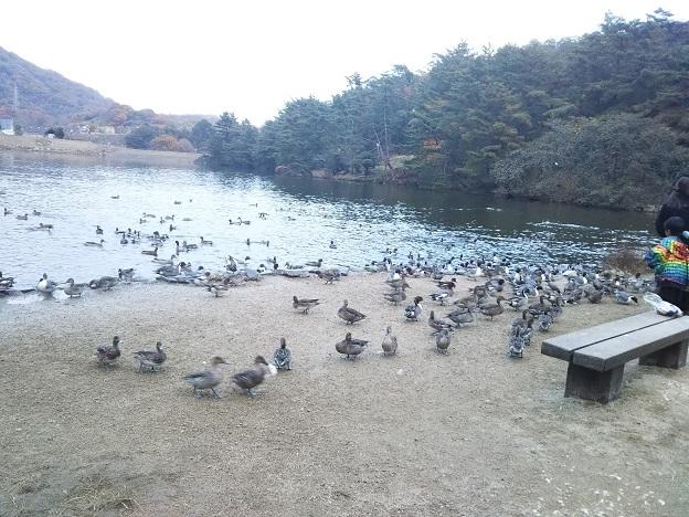 みやま公園 赤松池1