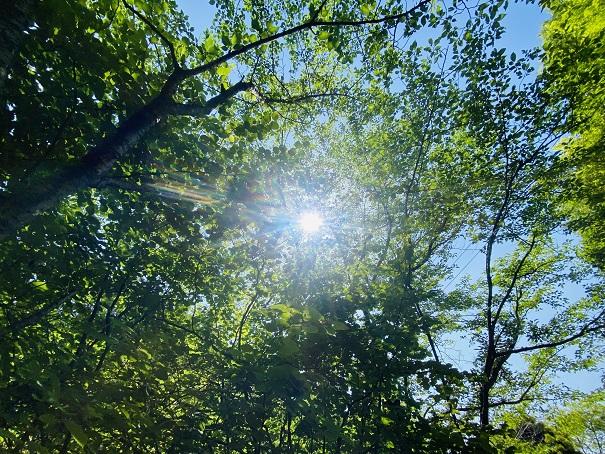 木漏れ日がキレイ