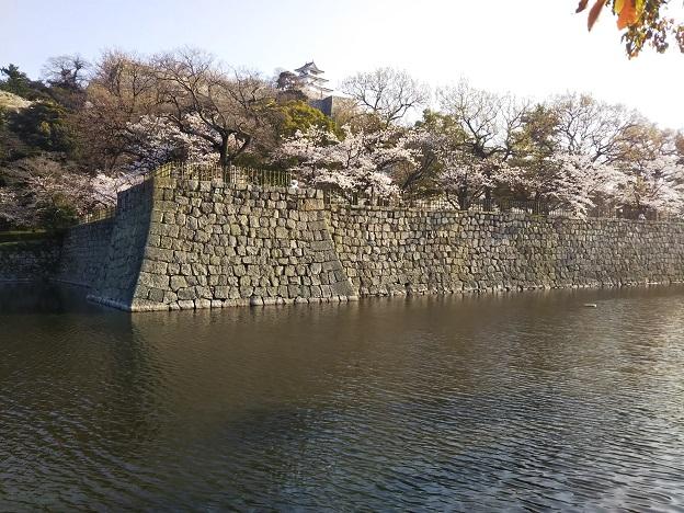 丸亀城 桜