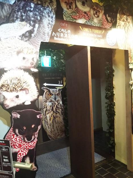 豆柴カフェ フクロウcafe