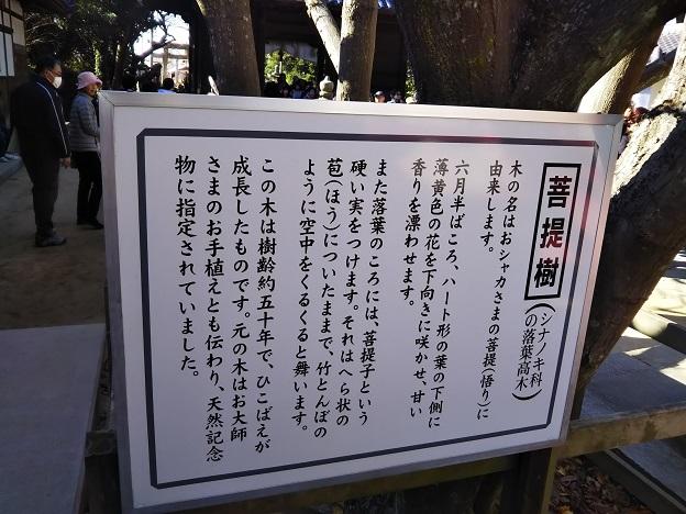 八栗寺 菩提樹
