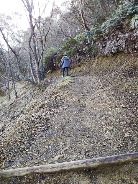 えひめ森林公園 山道