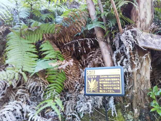 えひめ森林公園 木の説明