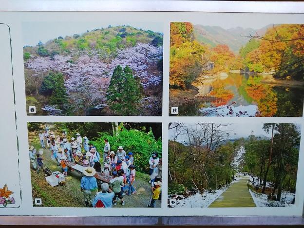 えひめ森林公園 四季の写真