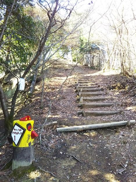 えひめ森林公園 アスレチックコースの道