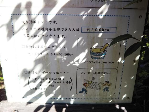 えひめ森林公園 アスレチックカロリー2