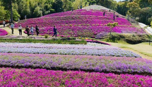 芝桜富士 ピンクの山に白い雪 カフェ食木の電柱 東かがわ市