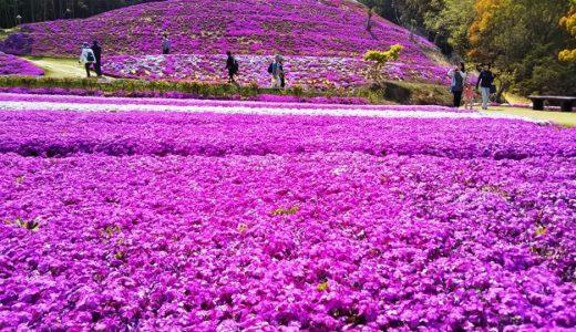 芝桜富士 お花のじゅうたん東かがわ市の私設公園