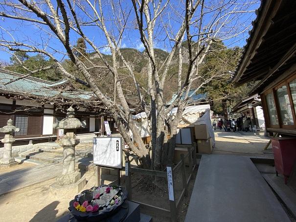 菩提樹八栗寺