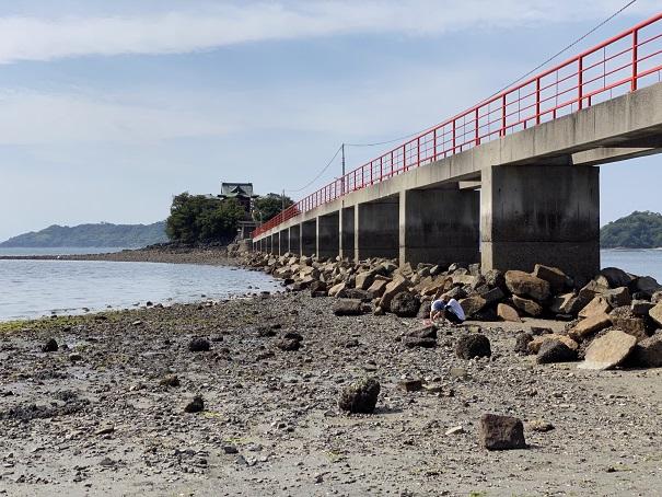 津嶋神社津島橋の麓でアサリを取る